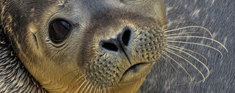 seal refuge