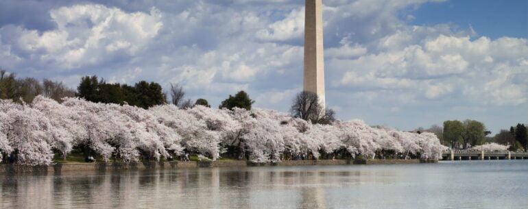 המקומות המומלצים בוושינגטון הבירה