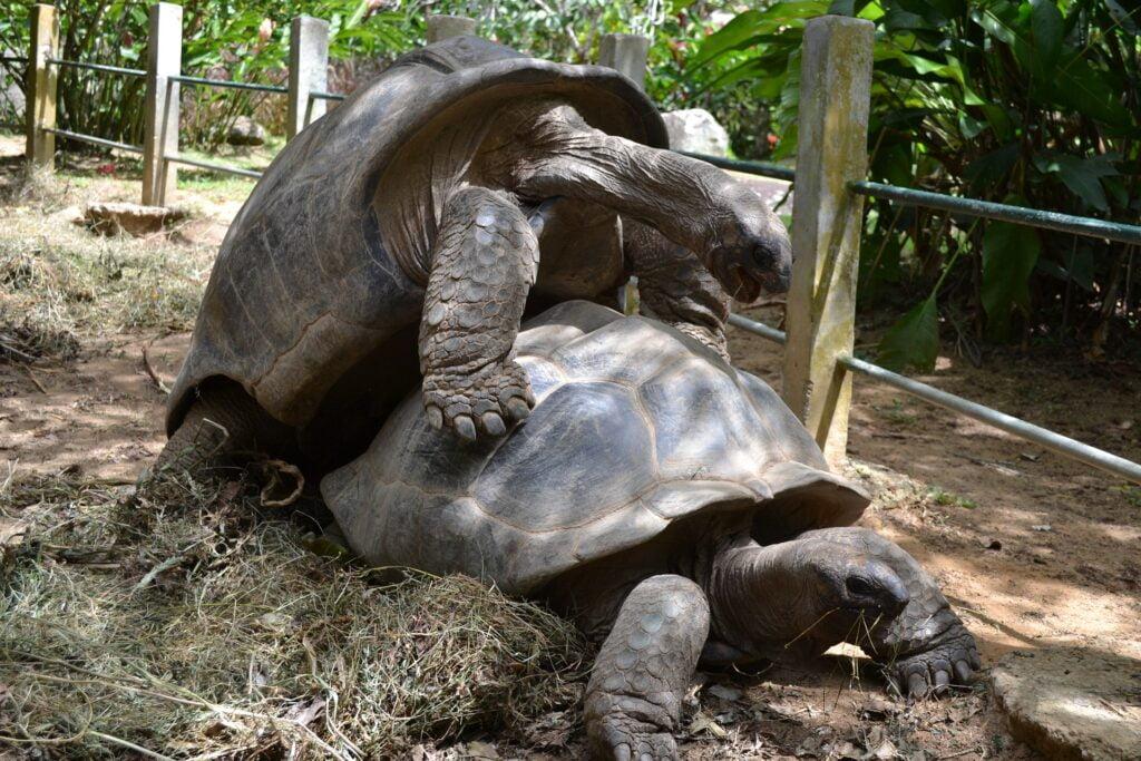 Aldabra Seychelles