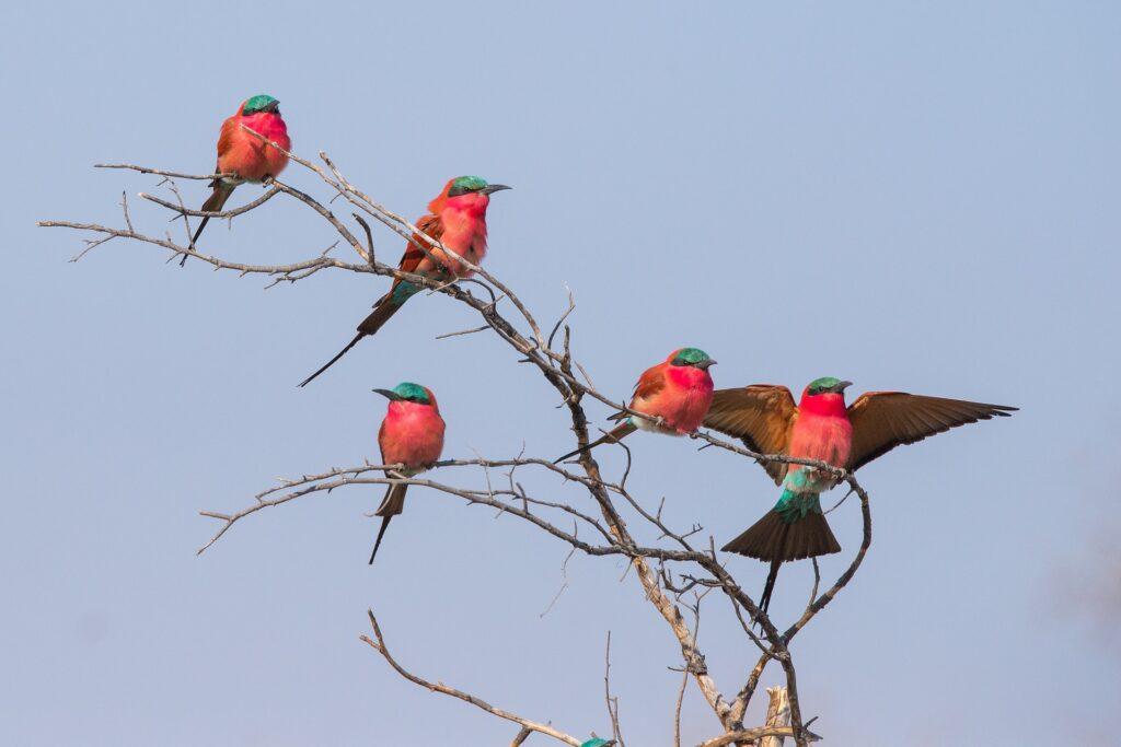 ver aves es de Las 10 mejores cosas para hacer en Botswana
