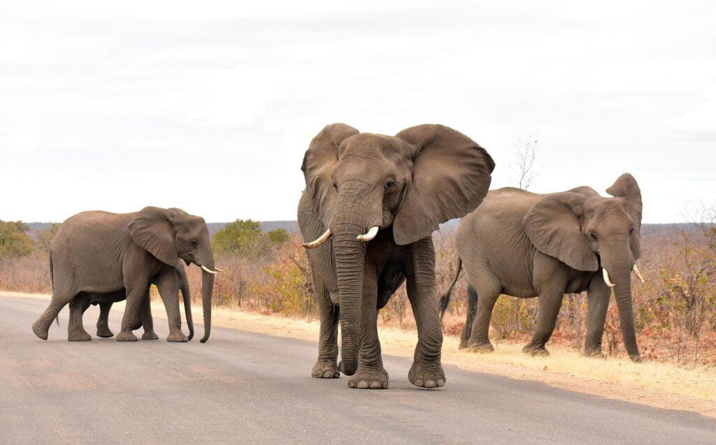 parque nacional kruger es de las mejores cosas que hacer en Sudáfrica en 2021