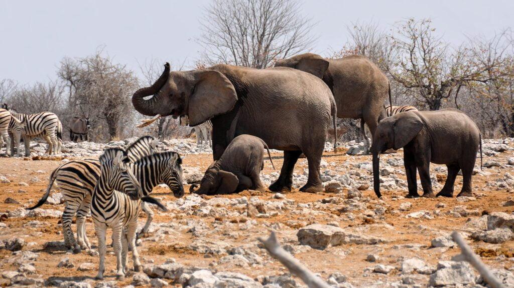 Parque Nacional de Etosha es de los mejores lugares para visitar en Namibia