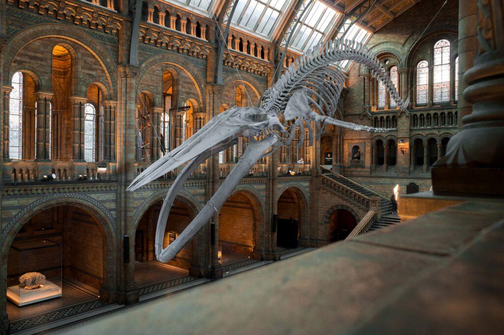 Museo de Historia Natural, Londres uno de los mejore museos en Europa