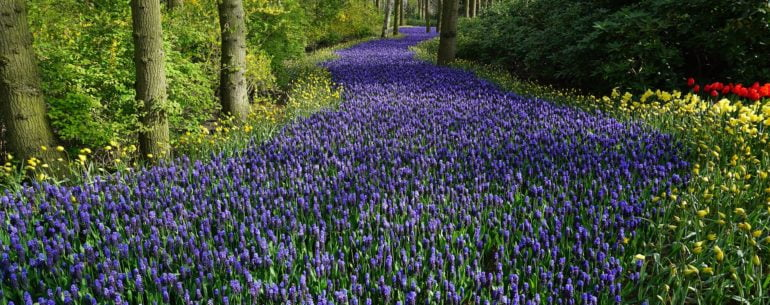 Holland's nature
