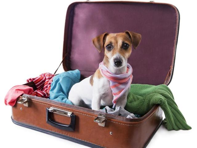 pets in hotels